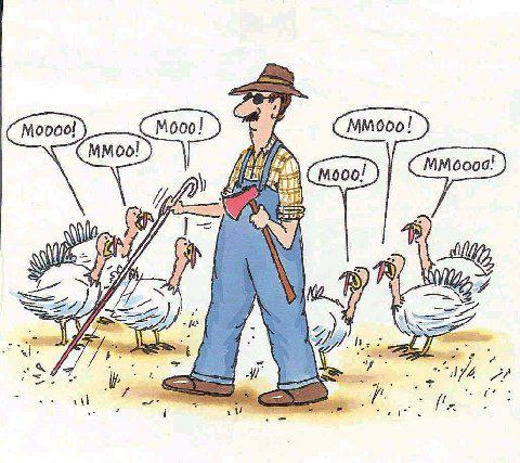 turkeycow.jpg