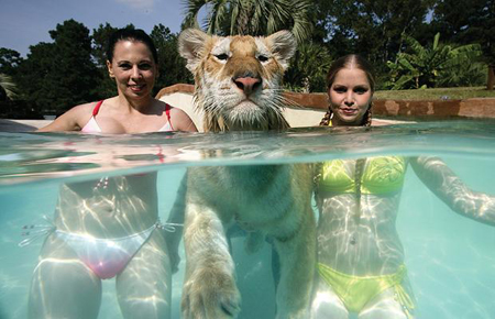 tiger-three-portra_1012149i-1.jpg