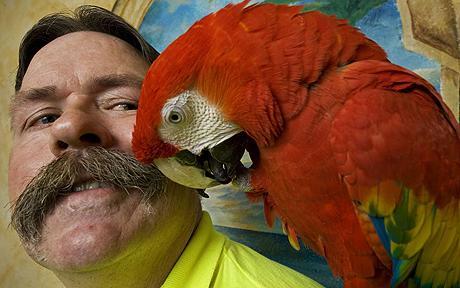 parrot_1356810c.jpg